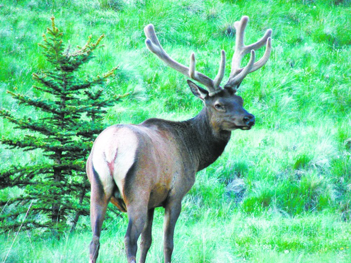 problems with wildlife Wildlife services experts are often asked to assist with wildlife damage problems  related to animals that have been accidentally or intentionally.