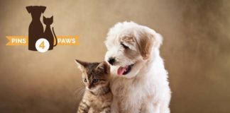 pins4paws