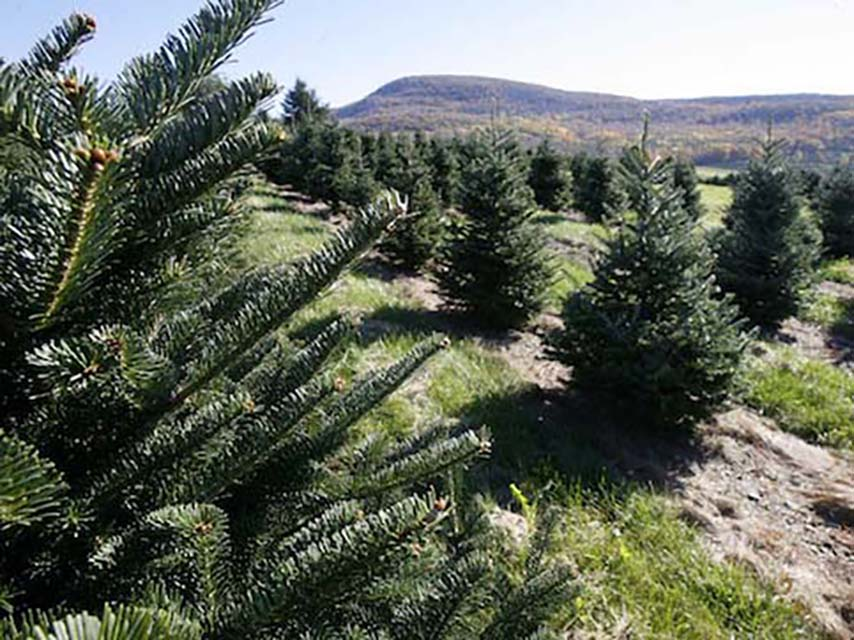 Tonto National Forest Christmas Tree Permits 2020 Tree permits from Arizona national forest | Sonoran News